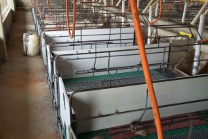 DIVISORIA PVC 50CM/ALT